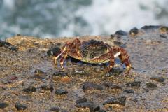Crab-Lake-Ghoubet-beach-W-of-Dijbouti-City-Djibouti-2014-May-b1-cropped
