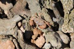 crab-turtle-island-near-Camp-Lemonier-Djibouti-2016-Feb-d1